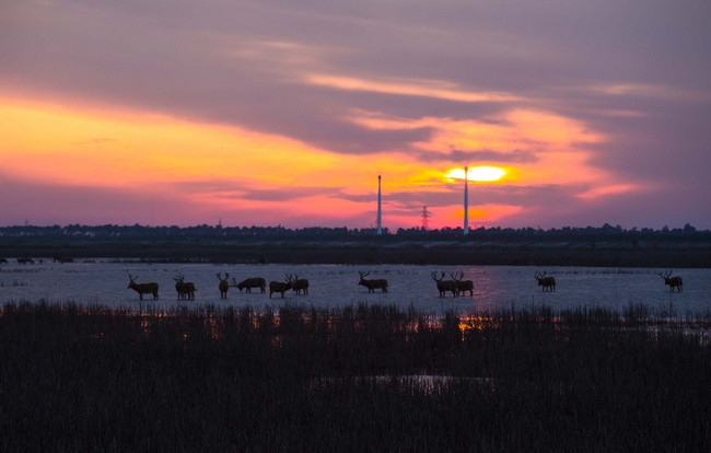 湿地精灵.jpg